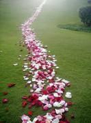 Love-Path