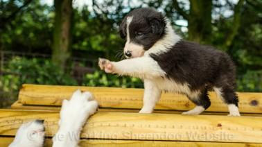 a-puppy