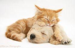よい眠りにつく
