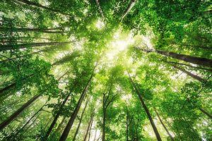 大自然と向き合う