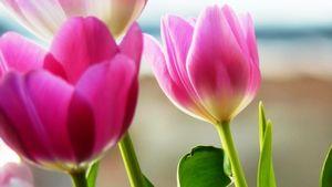 春の花を見つけにお散歩へ