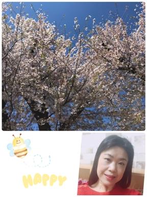 元気よく咲いていた桜です