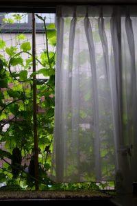 夏のカーテン