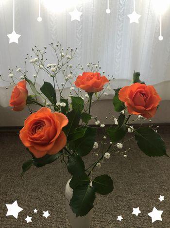 オレンジ色の薔薇の花