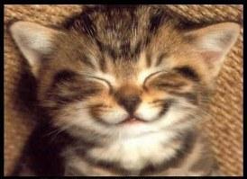 cat-smiling