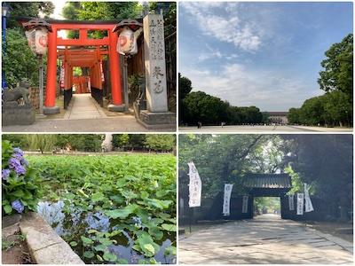 朝の散歩/上野公園